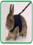 Arnés especial para conejos y hurones