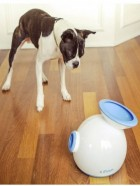 iFetch, lanzapelotas, perro pequeño